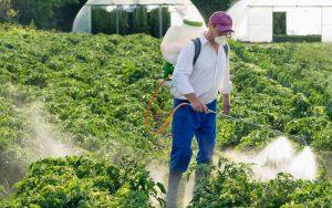 Mann besprüht Gemüse auf dem Feld