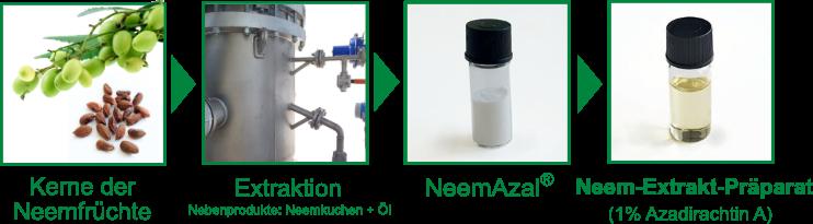 Herstellungsprozess Neem-Extrakt-Präparate vom Neembaum bis zum fertigen Produkt