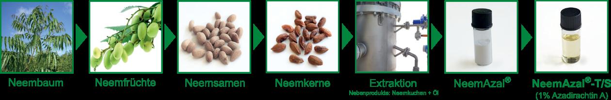 Herstellungsprozess NeemAzal-T/S vom Neembaum bis zum fertigen Produkt